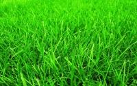 газон Премиум