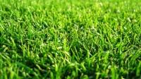газон придорожный