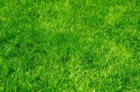 газон разнотравье