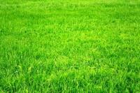 газон универсальный